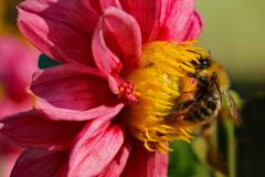 05_Bee-having-Tea
