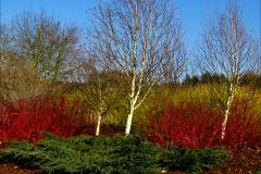 08_Autumnal-Colours