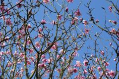 08_Blossom
