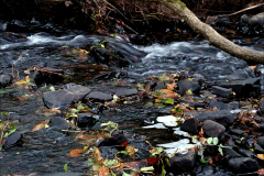 08_Stream-in-Autumn