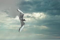12-Seagull