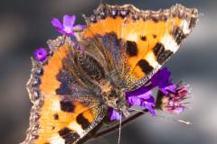 17_Butterfly