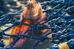 23_Fish-Net-Tight