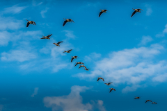 33_23_Fly-Past