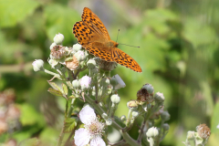 11_butterfly