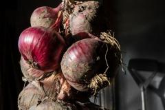 14_Onion-Harvest