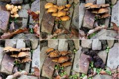 Mushroom composite v2