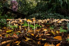 31_Forest-of-fungi